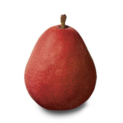 (1 ct.) Anjou Pear
