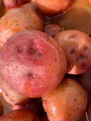 Extras Side of Red Potatoes
