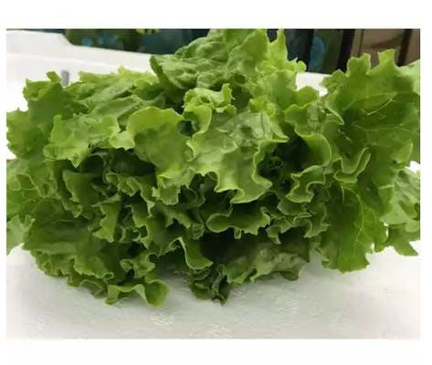 Organic Green Leaf Lettuce (1 ct.)