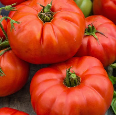 Beefsteak Tomato (1 lb.)