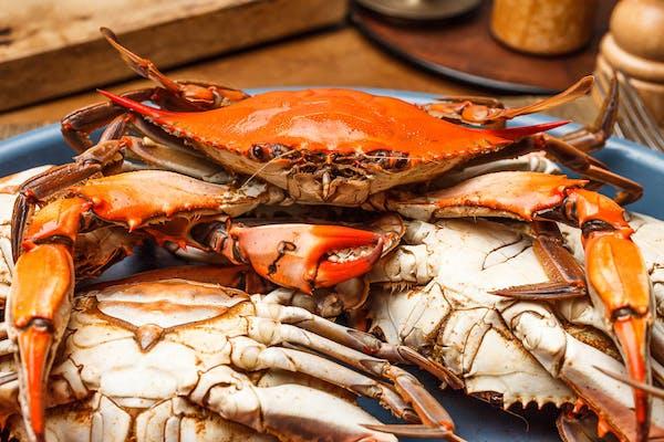 Medium Blue Crab