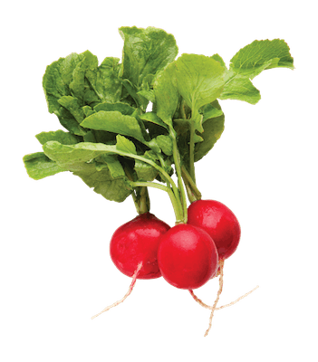 (1 ct.) Radish Bunch Red