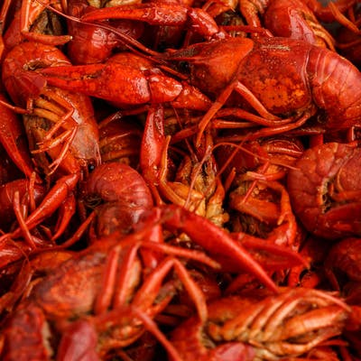 (4 lb.) Crawfish Plate